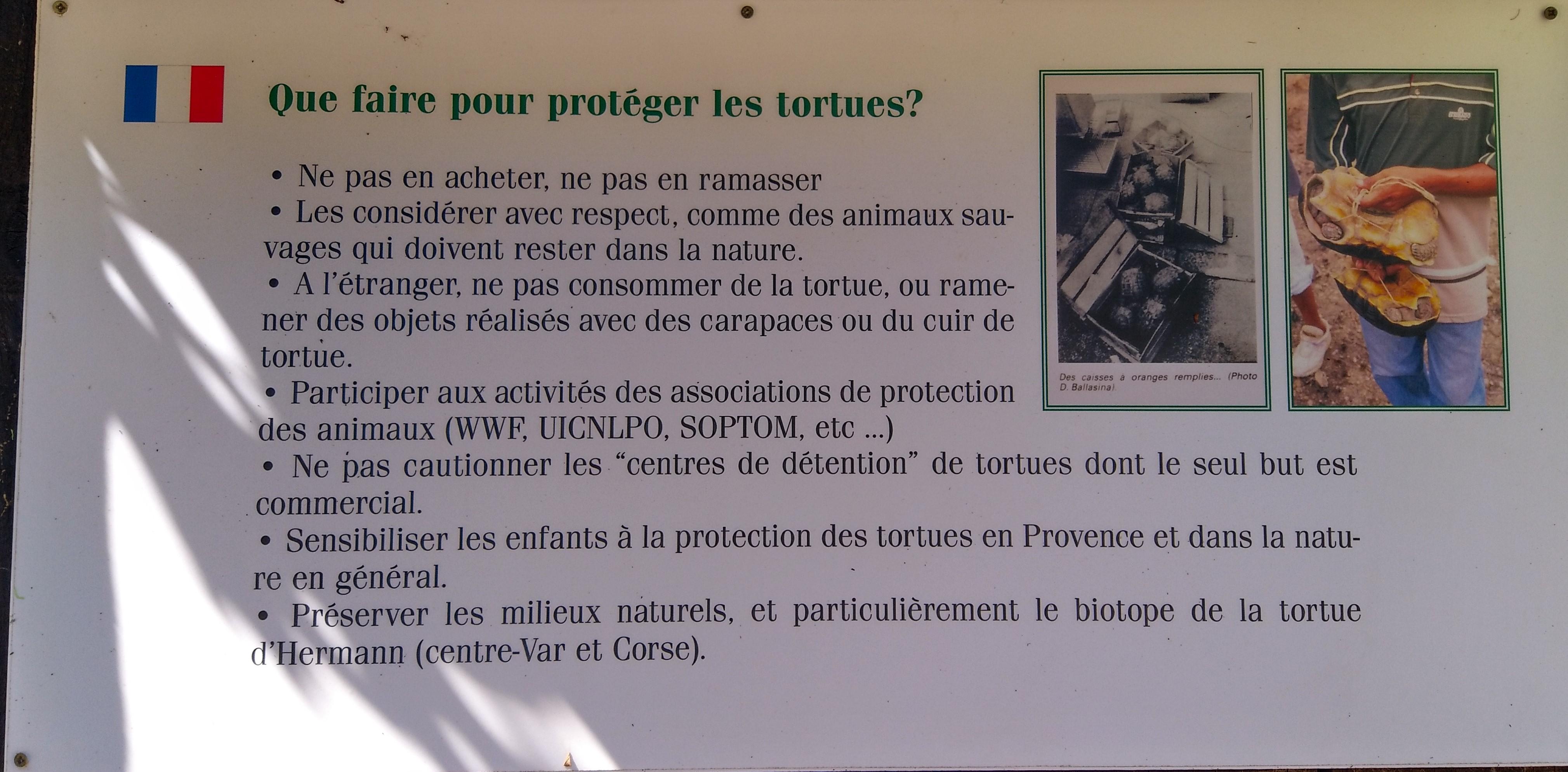 Comment protéger les tortues