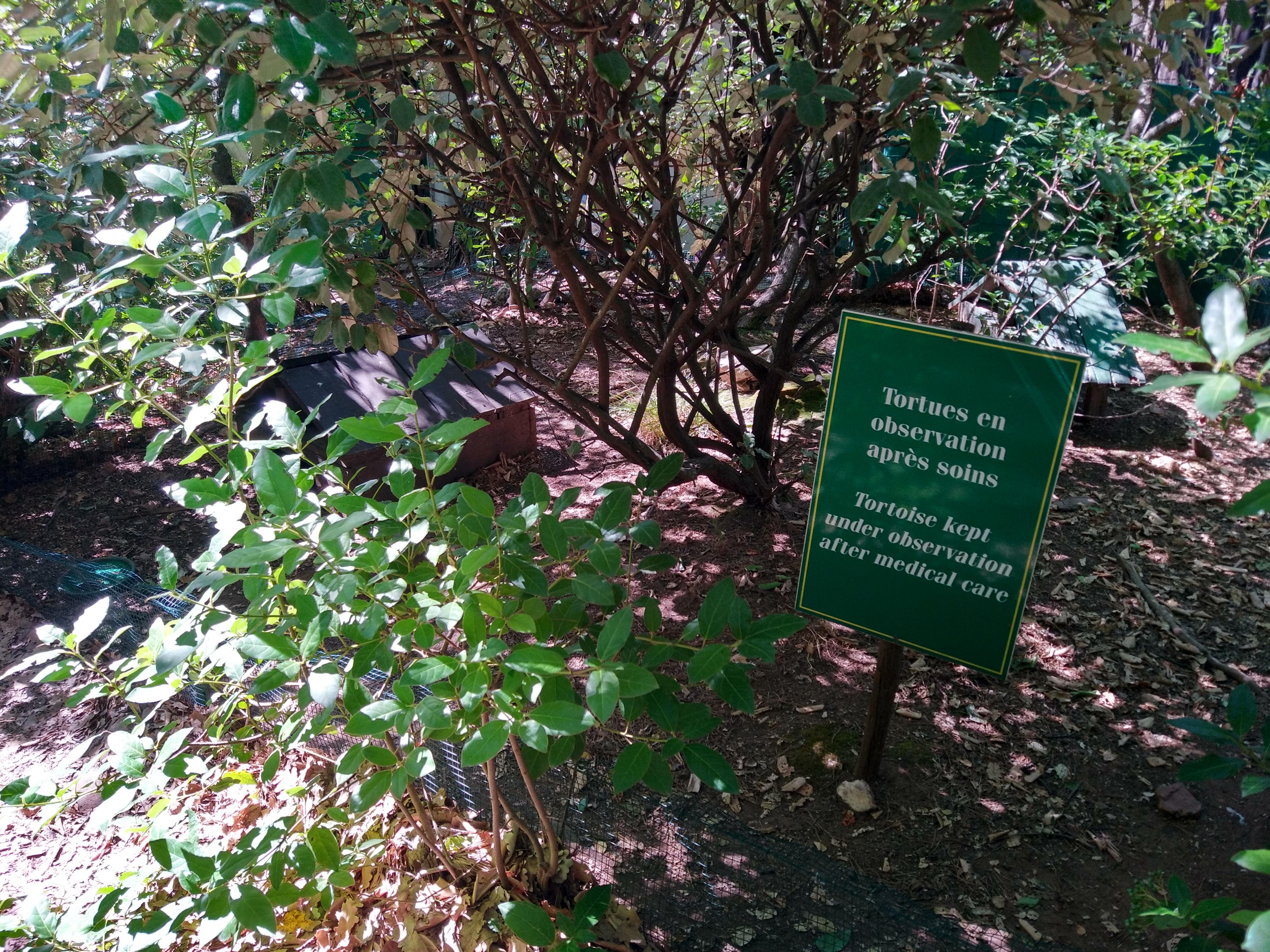 Parc de convalescence des tortues soignées